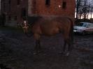 Koně, kteří u nás byli